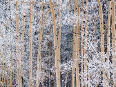 snow-aspens-new-mexico_82436_990x742