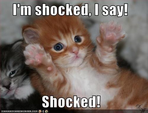 Im-shocked-kitten