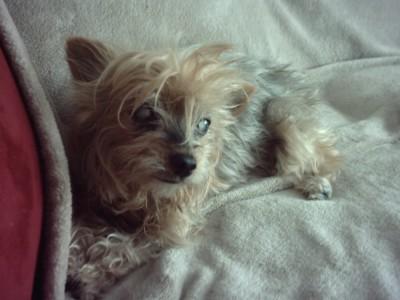 Trixie en repose