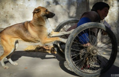 dog-push