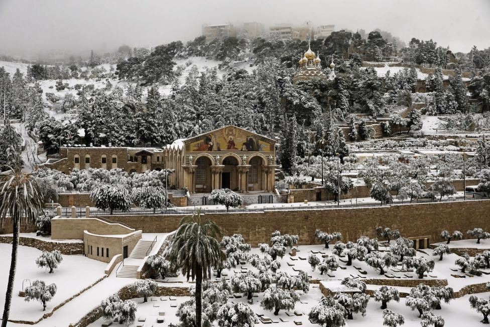 Snow covers the Garden of Gethsemane at the foot of the Mount of Olives in Jerusalem