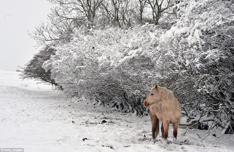 UK-snow-pony