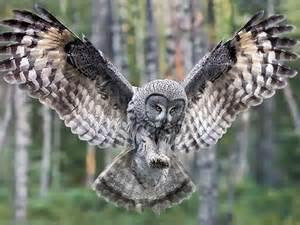 owltakeoff