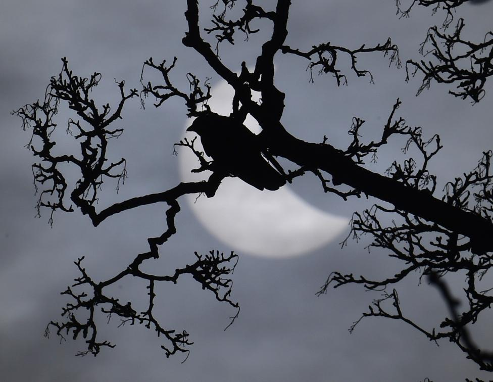 A bird sits on a branch in front of a partial solar eclipse near Bridgwater, in south western England