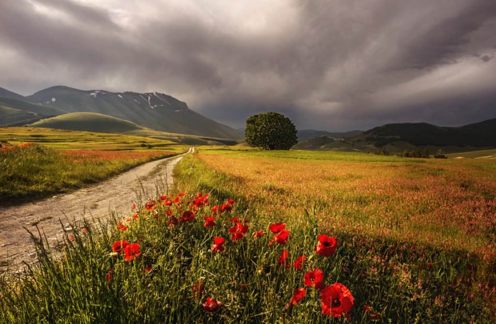Flowers-Italy-dark-clouds
