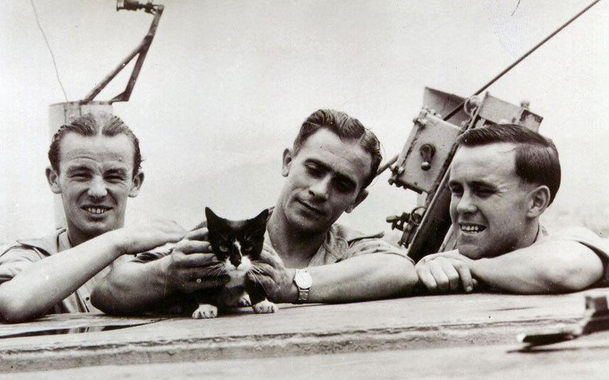 Hero Cat Simon - hated communists
