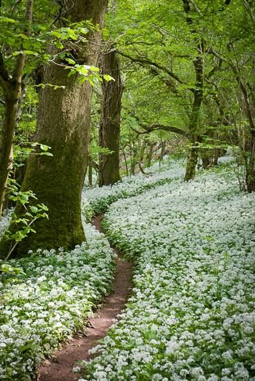 Path-flowers-Somerset