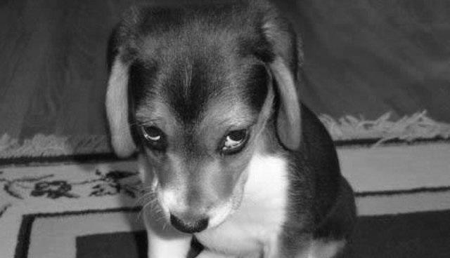 southwest dog allergy