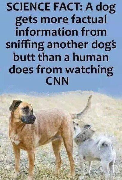 cnn-dogs-butt-409x600.jpg