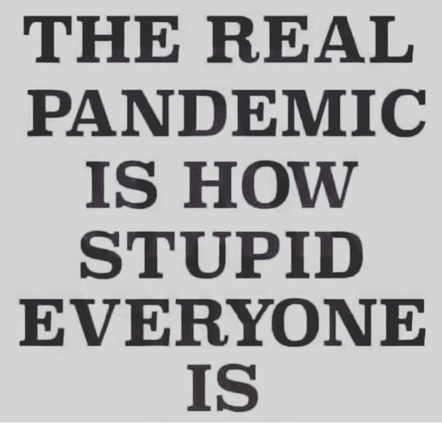covid-real-pandemic-stupid.jpg